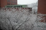 1st-snowfall-12-7-08-001